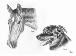 Horse and Dog Portrait charcoal portrait