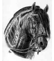 PRE Stallion charcoal portrait