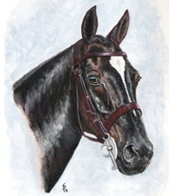 Polo pony - Watercolour