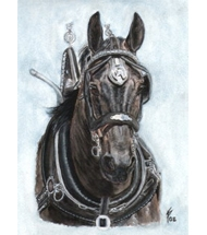 Percheron horse stallion - Watercolour