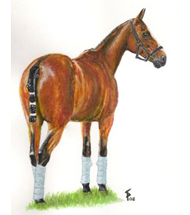Polo pony - Watercolour Painting
