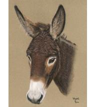 Donkey pastel portrait