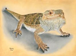 Bearded Dragon pastel portrait