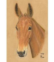 Mule pastel portrait