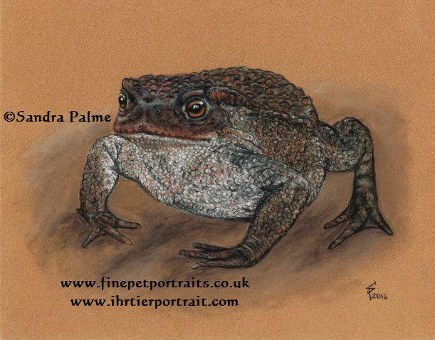 Common Toad Bufo bufo portrait
