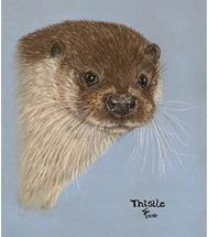 European Otter pastel portrait