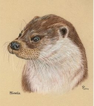 European Otter Portrait pastel portrait