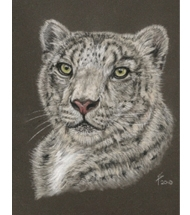 Snow Leopard pastel portrait