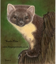 Pine Marten pastel portrait