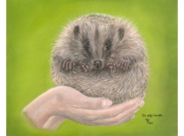 Hedgehog Portrait pastels