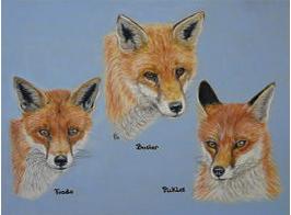 Red Foxes pastel portrait