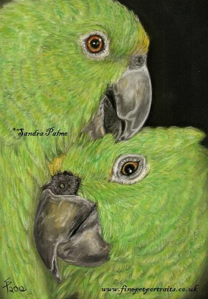Yellow-crowned Amazons pastel bird portrait
