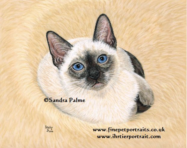 Thai Cat Portrait Classic Siamese