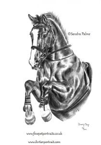 Danny Boy horse portrait