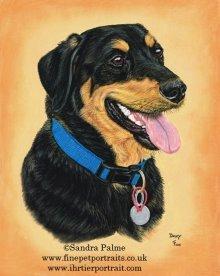 Dog Dexy portrait