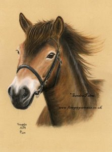 Exmoor pony Fraggle portrait