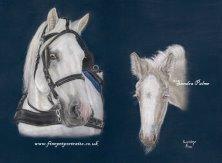 American Cream Draft Horse Lucky portrait