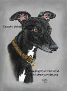 Greyhound Mabel portrait