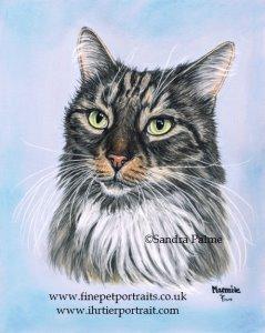 Cat Marmite portrait
