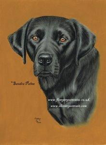 Black Labrador Motty