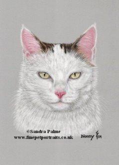 Cat Nonny portrait