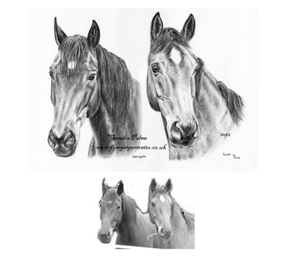 Horses Portrait with Reference Photo