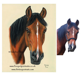 Arabian Horse Portrait with Reference Photo