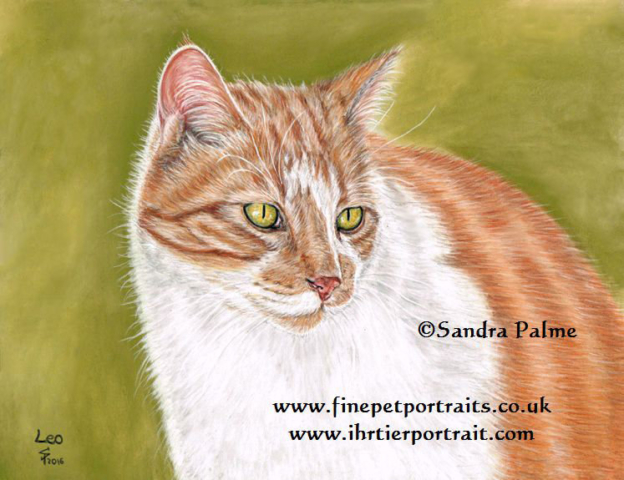 Ginger and white cat portrait