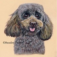 Miniature Poodle in Pastels