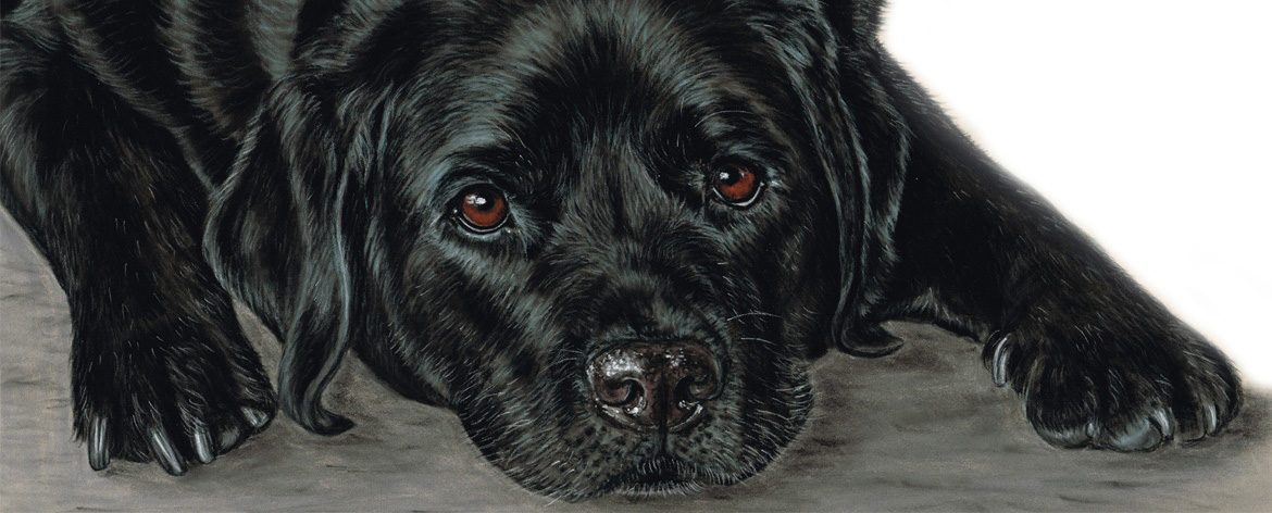 Black Labrador in Pastels