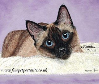 Cat Portrait in Pastels