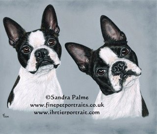Head study of two dogs in pastels