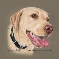 Yellow Labrador in Pastels