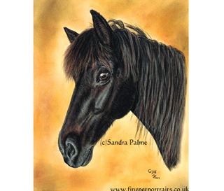 One of my pastel portraits of a Horse