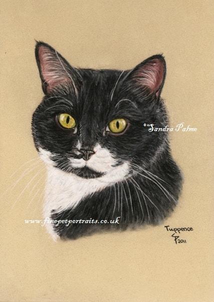 Cat Portrait Artist Cat Portraits From Photograph Cat