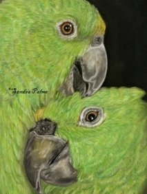 Bird Portraits