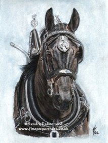 Horses Watercolour Portraits