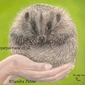 Hedgehog pastel portrait