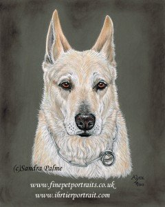 White Shepherd Dog Portrait Alsatian