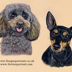Toy Poodle & Toy Manchester Terrier drawingLottie and Amy
