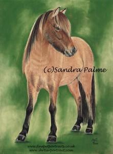 Icelandic Horse Ari Portrait