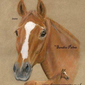 Wuerttemberg Horse