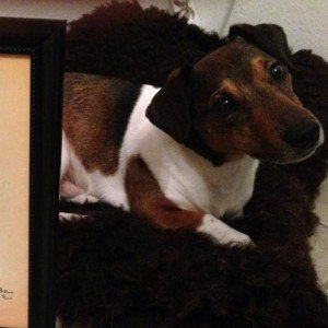 Jack Russell Balou with portrait