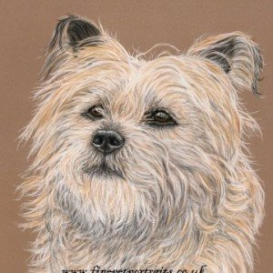 Cairn Terrier portrait in pastels