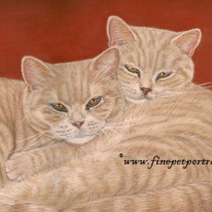 British Shorthair Creams
