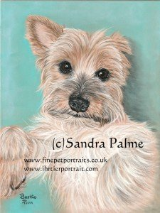 Yorkshire Terrier pastel portrait