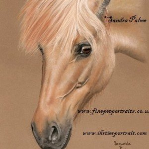 Icelandic x Fjord Horse drawing