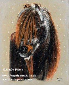 Shetland Pony pastel portrait