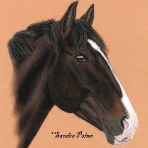 Bay Pony portrait