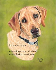Dog Portraits Gallery